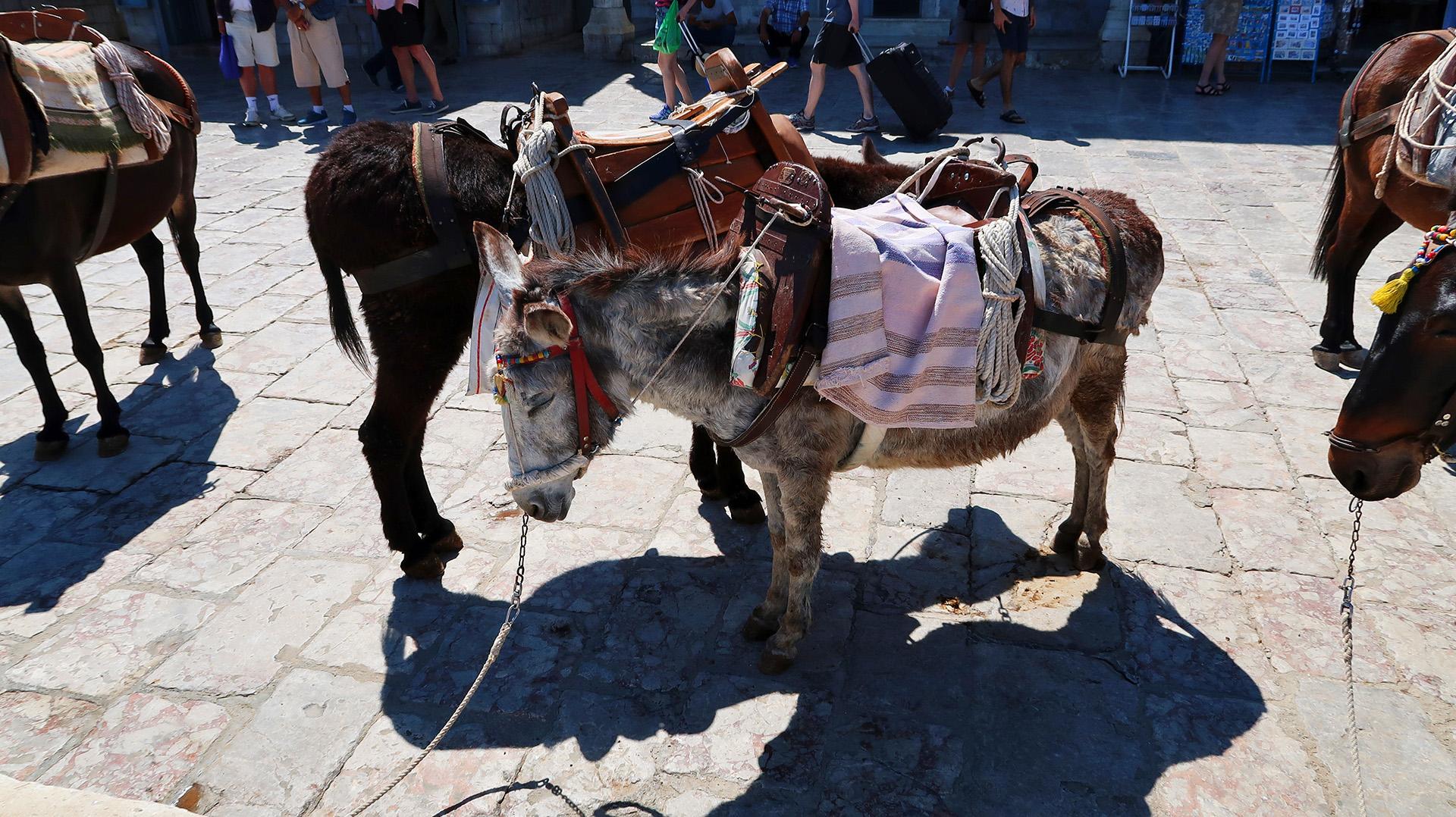 sway the way hydra donkeys1