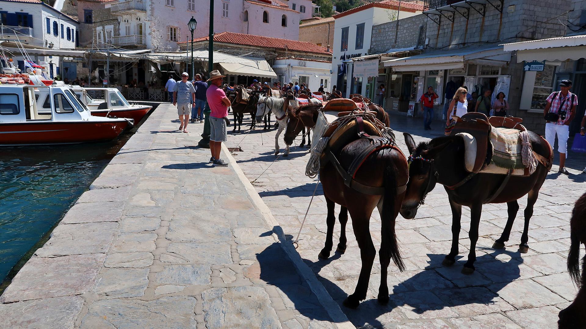 sway the way hydra donkeys2