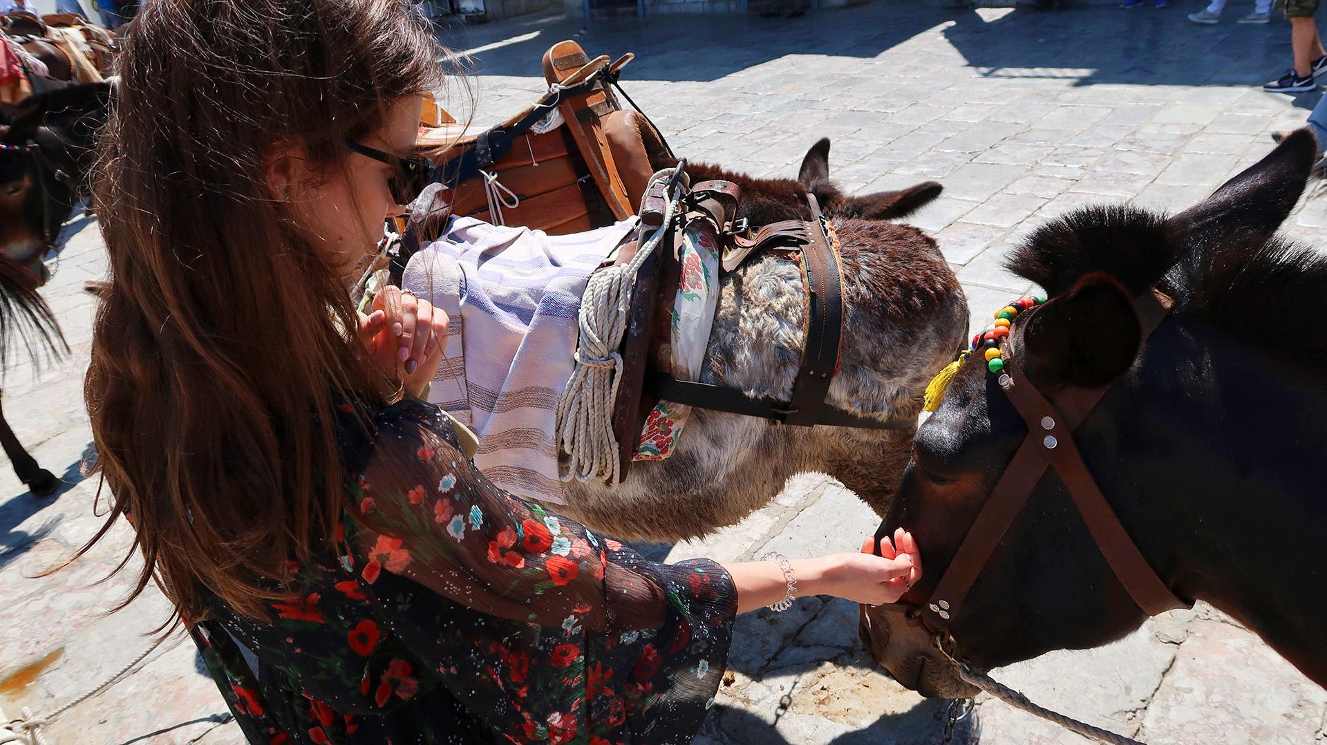 sway the way hydra donkeys4