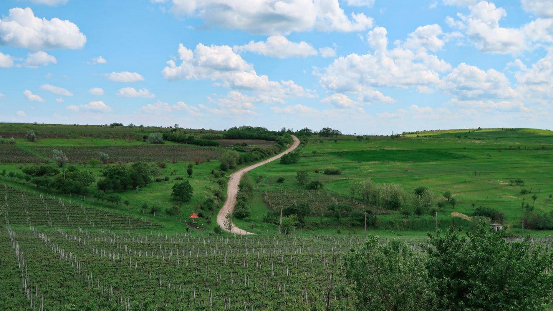sway the way rumunia winnice lacerta10